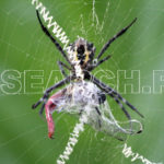 A spider feeding, Peshawar, KP, April 30, 2013