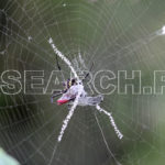 A spider trapping a dragon fly, Peshawar, KP, April 30, 2013