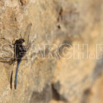 Dragon Fly on a mud wall, Islamabad, December 25, 2011