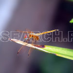 Dragon fly in action, Peshawar, KP, September 1, 2011