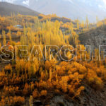 Ghizar Valley, Gilgit-Baltistan, October 30, 2011