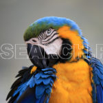 Macaw at Safari Park, Lahore, Punjab, January 22, 2017